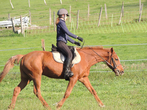vign dressage legerete